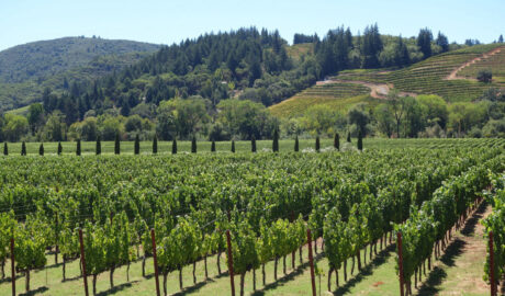 Escape to The Winery